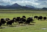 tibet_orientale009.jpg