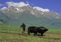 tibet_orientale044.jpg