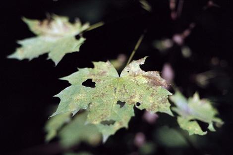 Forever Autumn FineArt