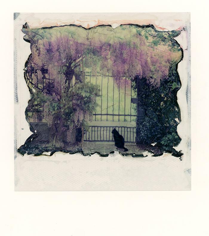 Prigione o paradiso