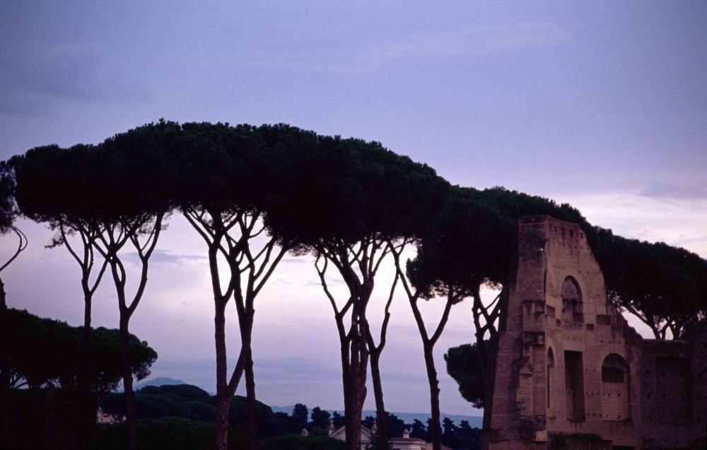 Forum Romanum Rome Italy 2012