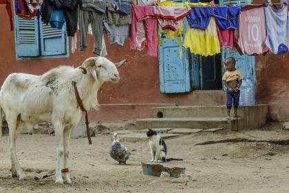 VIAGGIO FOTOGRAFICO IN SENEGAL